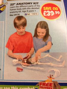Boy and girl playing with human body biology toy